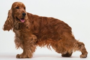 pilt on illustratiivne- koer.ee